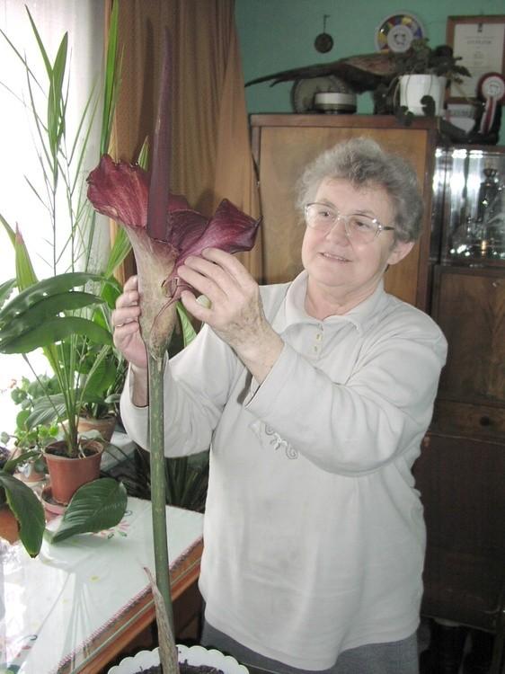 Niesamowite Cudny kwiat o zapachu… padliny TJ64